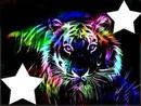 tigre multicolore 2 photos