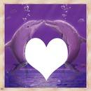 cadre dauphin 1 photo