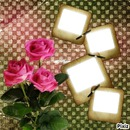 les 3 roses