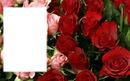 carte avec des roses