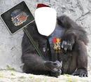 gorille à l'armée