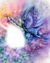 butterfly fantasie