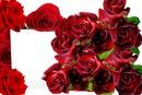 Cc Rosas y mas rosas