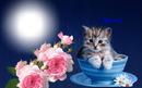 Cadre chaton