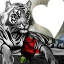 le tigre et la rose