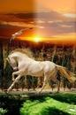 renewilly caballo