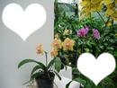 orchidées fleur