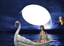 bateau cygne