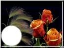* roses*