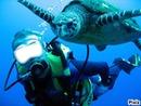 plongéé sous marine
