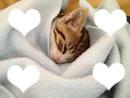 chat dans couverture