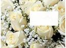 Cc Rosas Blancas