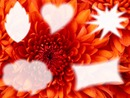 collage de flor con 5 fotos