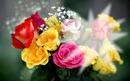 Flores de Wil