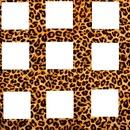 8 photo léopard