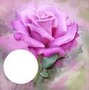 pink rose frame fran
