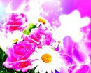 Flowers sparkling