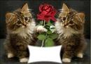 deux chats avec une rose