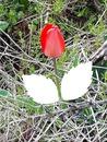 fleur  photos Cris