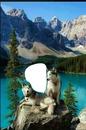 lobos sobre roca