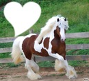 Most beautiful horse in the life