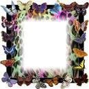 leo butterfly