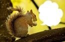 un écureuil*