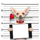 Dog & Rose