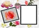 Cadres de roses rose*