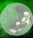 cercle de paradis