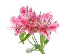 Beautiful flowers like you #10