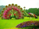 jardin paon