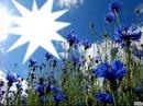 Trés fleurs bleue*