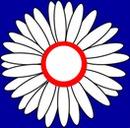 Marguerite tricolore