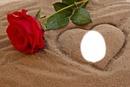 rose sable