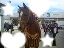 toi et les chevaux