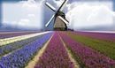 Mulino a vento 2 foto
