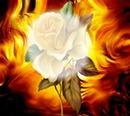 Liebe gleicht den Duft der Rose