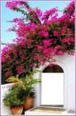 Portal Florido! {M.R.}