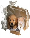 chien/chat 4 cadres