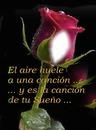 Cc rosa roja+texto
