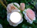 ma rose rose