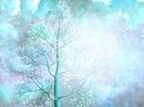 arbre 67
