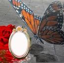 Linda mariposa posando en cuadro