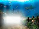 mer poisson