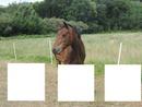 3 cheval (alba)