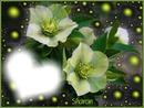 csillogo virágok