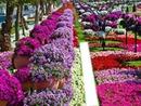 parc fleurie