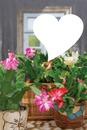 Niver da Flor de Maio