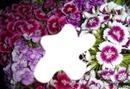 fushia flower